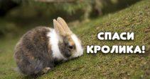Стартовали совершенно новое событие «Бешеные Гонки» и популярный ивент «Спасти Кролика»