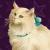 Картинка профиля Дикая Кошка