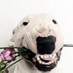 Картинка профиля GospoD