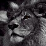 Картинка профиля Weasea