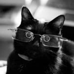 Картинка профиля Черный Кошак