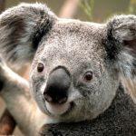 Картинка профиля Sir Panda