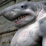 Картинка профиля Акула