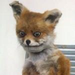 Картинка профиля Dead_Fox