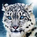 Картинка профиля Ирбис